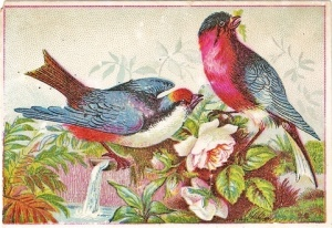 BirdMates
